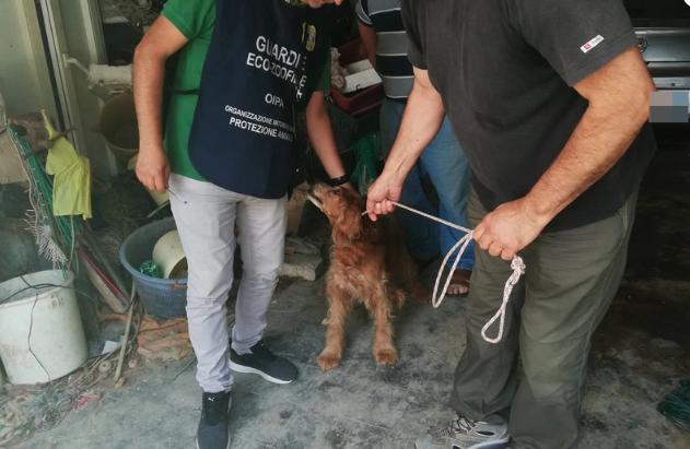Ancona: OIPA salva un cane chiuso in un magazzino tra i rifiuti