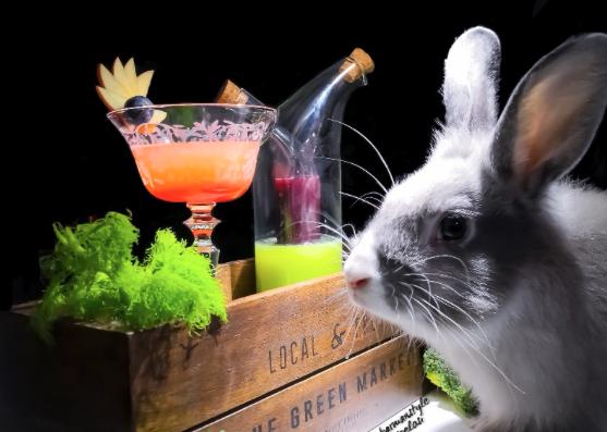 Cocktail per conigli? Una soluzione alternativa per la loro salute