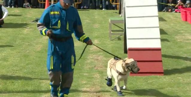 Messico: il cane da soccorso Frida va in pensione dopo 9 anni di servizio