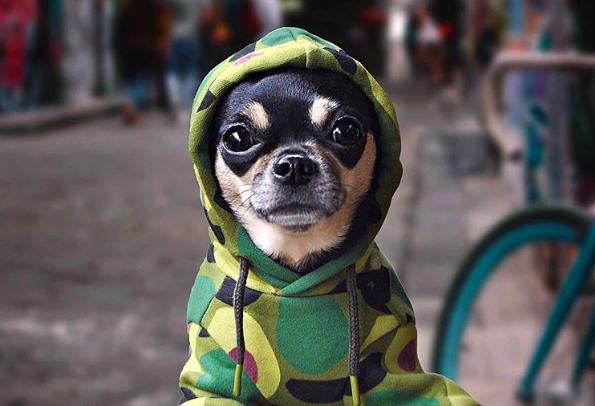 Diventare pet-influencer su Instagram: ecco cosa occorre sapere!