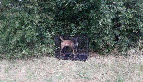 Cane abbandonato in un bosco rinchiuso in una gabbia: salvato dalla polizia