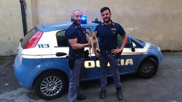 Torino: cane salvato dalla polizia e adottato. Presto sarà un cane poliziotto