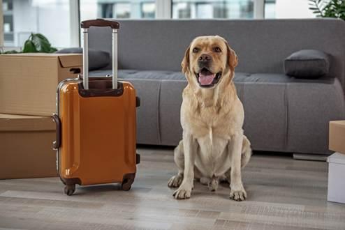 I consigli per andare in vacanza con i nostri animali