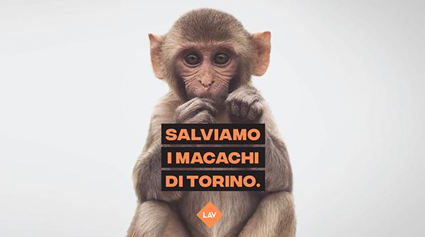 Salviamo i macachi di Torino: un grande passo avanti per la LAV
