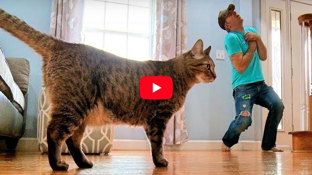 Il padrone finge di morire per vedere la reazione del gatto: il video commuove il web
