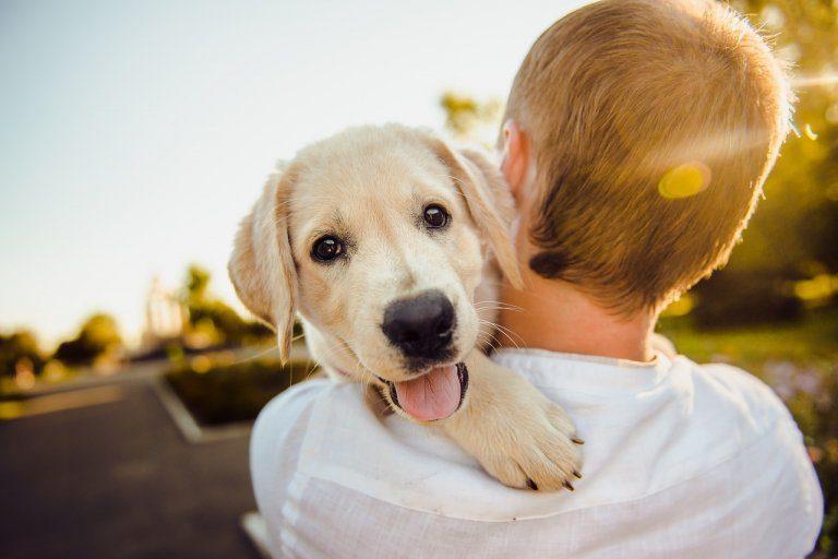 Oggi 26 agosto: la Giornata internazionale del cane