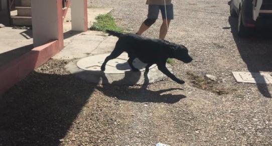 Bastona il cane sul balcone: una donna denunciata e l'animale sequestrato
