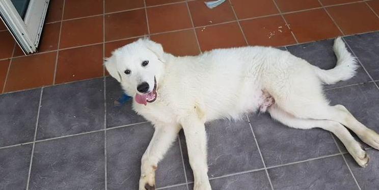 Francavilla: Gucci il cane salva la sua padrona dalla morte e adesso cerca una nuova famiglia