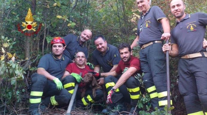 Cane finisce in un buco nel terreno: i vigili del fuoco lo salvano grazie a un GPS