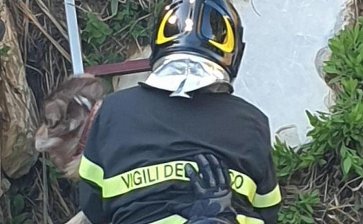 Livorno: cane cade in un torrente salvato dai Vigili del Fuoco