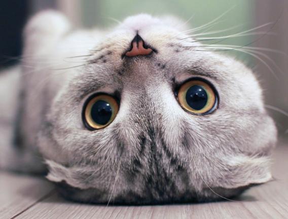 Curiosità sui gatti: 3 cose da sapere