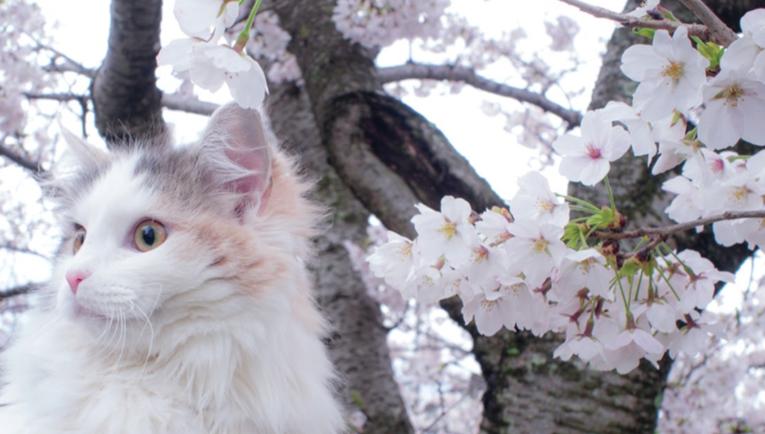 I Fiori di Bach per i gatti: cosa sono e come funzionano