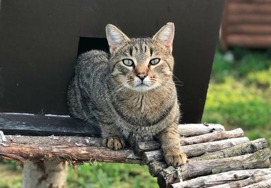 """Il progetto """"Dona una casetta"""" per aiutare gatti dell'Oasi felina dell'OIPA di Ascoli Piceno"""