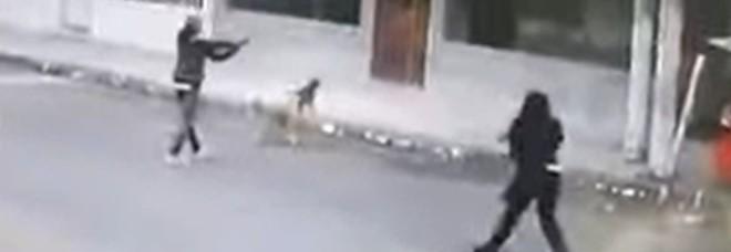 Due cani randagi salvano una ragazza da una rapina