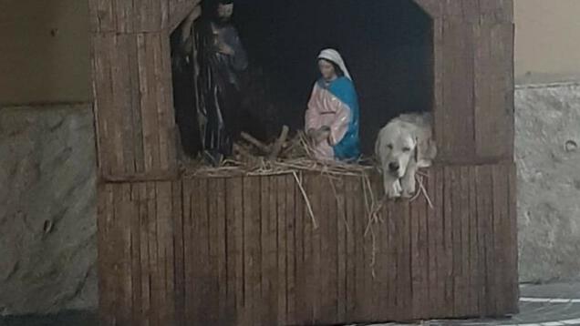 Cane abbandonato trova rifugio nel Presepe di Natale