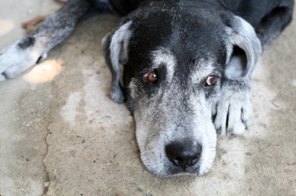 LNDC: a Natale fai un gesto d'amore, adotta a distanza un cane anziano!