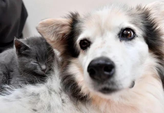 Cagnolina diventa mamma e adotta sei cuccioli di gatto abbandonati
