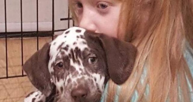 Ladri rubano il cane da Pet Therapy a una bambina autistica di 11 anni