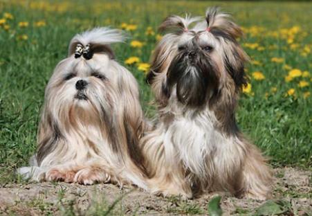 Gli 8 cani ideali per la vita in un monolocale