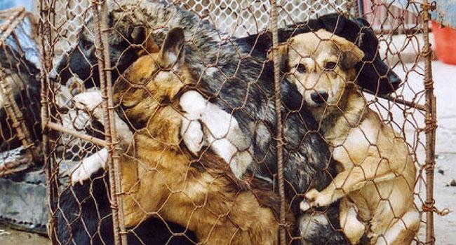 Coronavirus: in Cina cani e gatti gettati dalle finestre