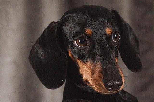 5 cose da sapere sui cani di piccola taglia