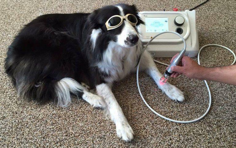 Tutelare la salute del cane in vacanza