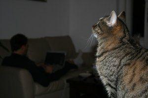 3 concorsi multimediali dedicati agli animali domestici