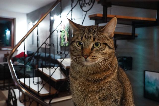 Perché il gatto fa la pipì in giro per casa?