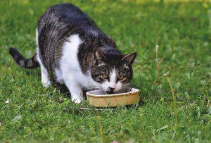 perché dare cibo confezionato al gatto
