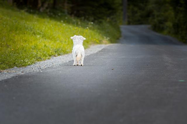 Abbandonare un animale è reato