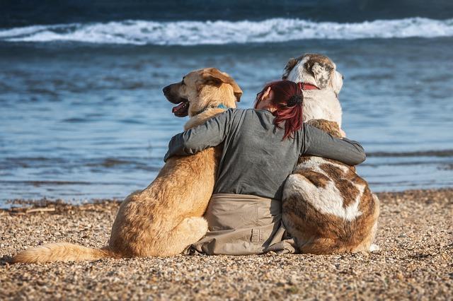 Spiagge libere per cani: poche e degradate