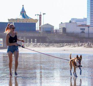 spiagge libere per cani