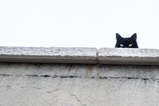 vista dei gatti