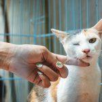 medicine gatti