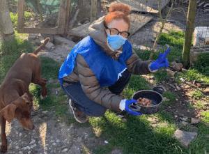 volontari cani