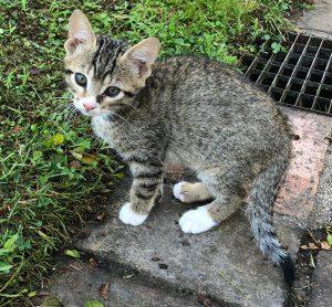 gatto da adottare