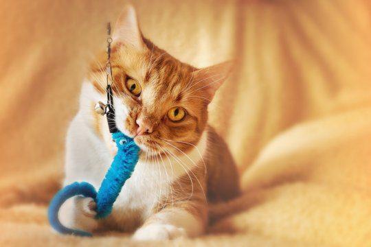 giochi gatti