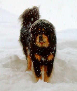 Snowtis