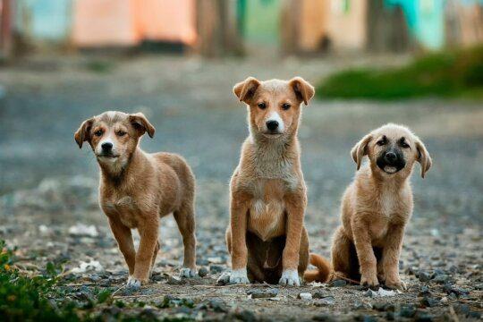 cuccioli sequestrati