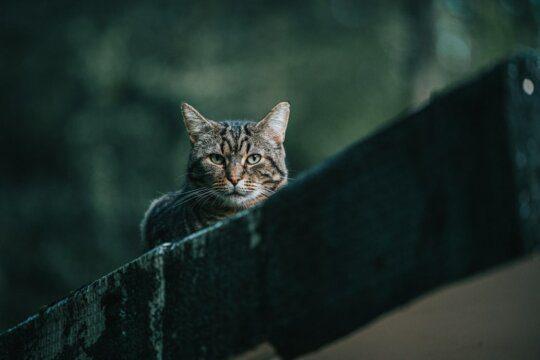 gatti nome