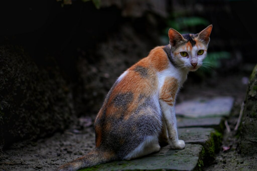 vista gatti