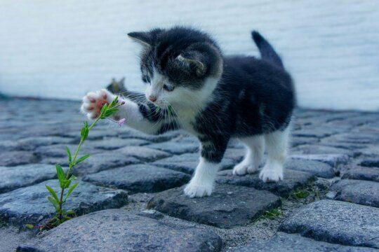 gatti calzini