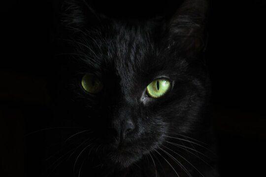 calmare gatto notte