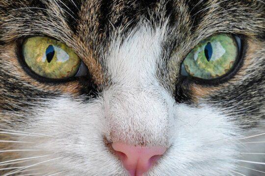 gatti più longevi