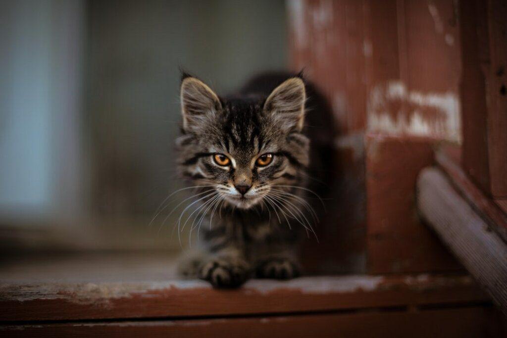comportamenti strani gatti