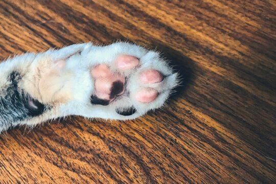 cane gatto mancino