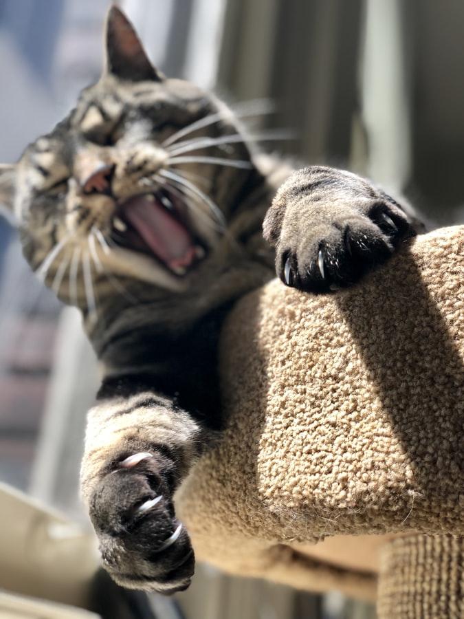 artigli gatti