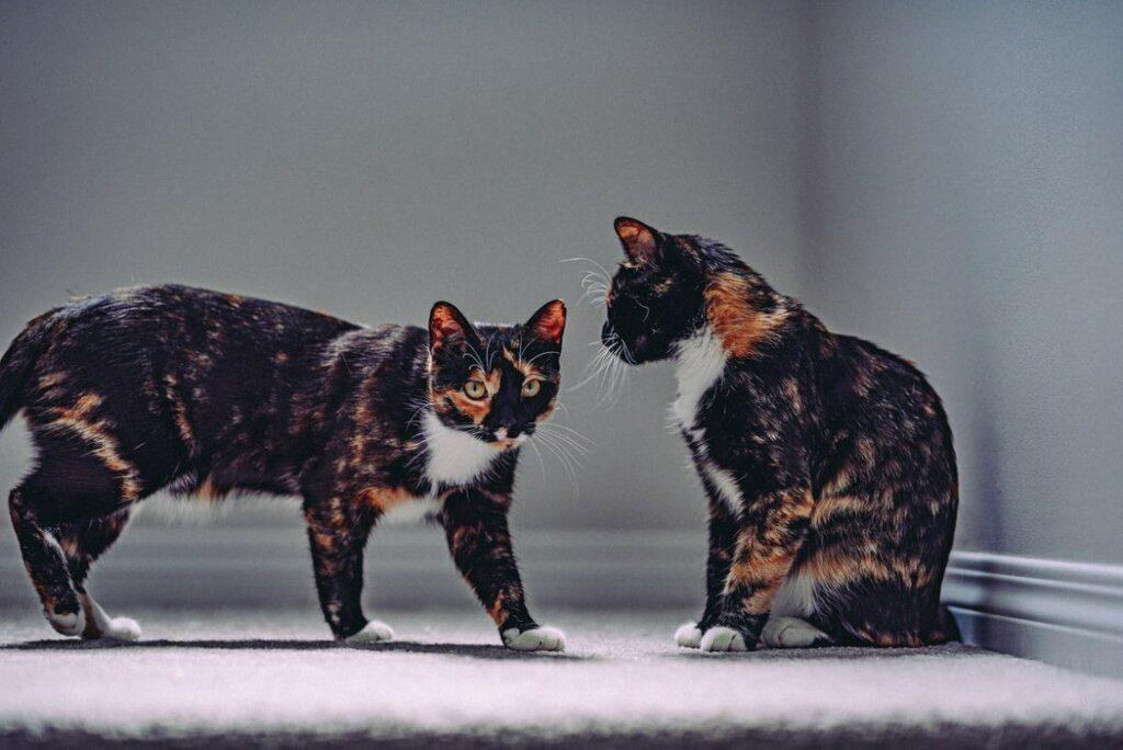 gatti comunicano