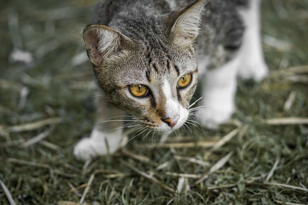 gatti chicago