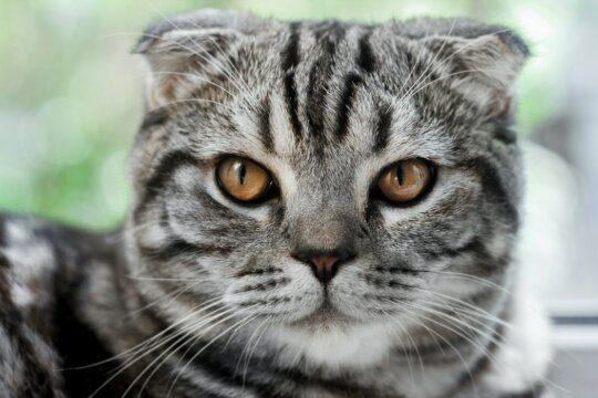 gatto zecca